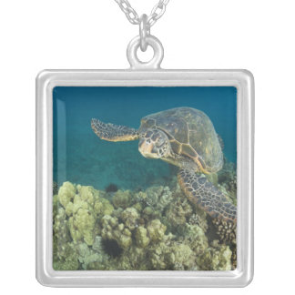 The Green Sea Turtle, (Chelonia mydas), is the 2 Silver Plated Necklace