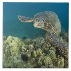 The Green Sea Turtle, (Chelonia mydas), is the 2 Tile