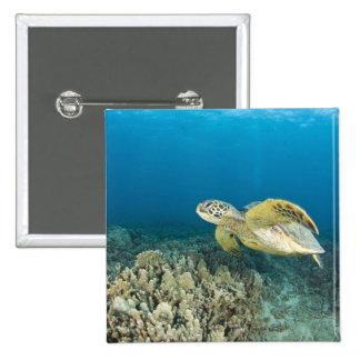 The Green Sea Turtle, (Chelonia mydas), is the 3 15 Cm Square Badge