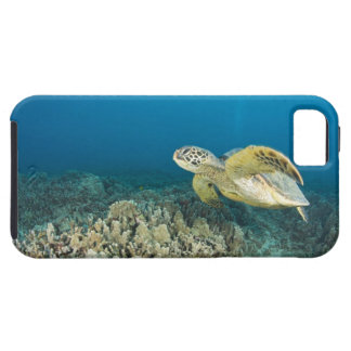 The Green Sea Turtle, (Chelonia mydas), is the 3 iPhone 5 Covers