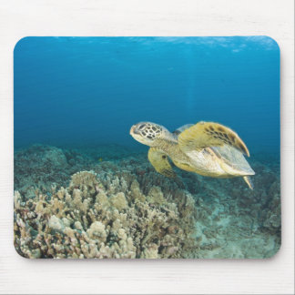 The Green Sea Turtle, (Chelonia mydas), is the 3 Mouse Pad