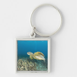 The Green Sea Turtle, (Chelonia mydas), is the 3 Silver-Colored Square Key Ring