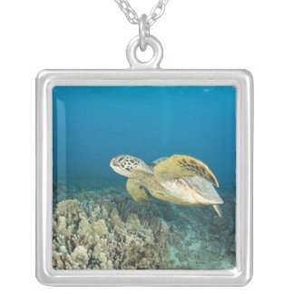 The Green Sea Turtle, (Chelonia mydas), is the 3 Silver Plated Necklace