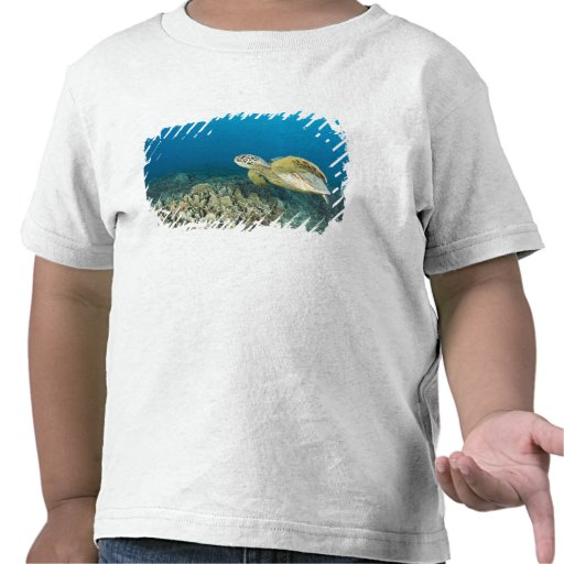 The Green Sea Turtle, (Chelonia mydas), is the 3 T Shirts