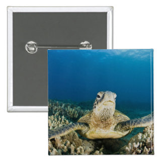 The Green Sea Turtle, (Chelonia mydas), is the 15 Cm Square Badge
