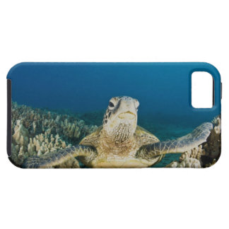The Green Sea Turtle, (Chelonia mydas), is the iPhone 5 Cover