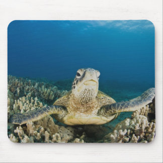 The Green Sea Turtle, (Chelonia mydas), is the Mouse Pad