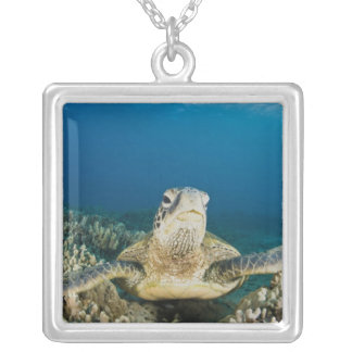 The Green Sea Turtle, (Chelonia mydas), is the Silver Plated Necklace