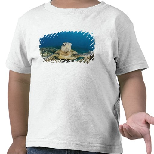 The Green Sea Turtle, (Chelonia mydas), is the T-shirt