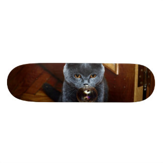 The grey cat British breed with large yellow eyes Skate Board Decks
