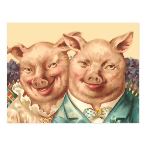 The Handsome Pig Couple Postcard