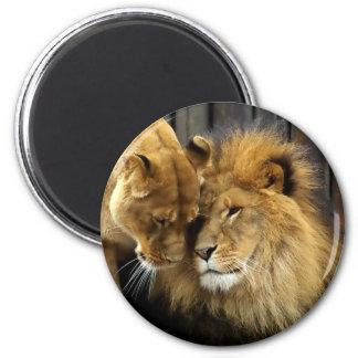 The Happy Lion Couple Magnet