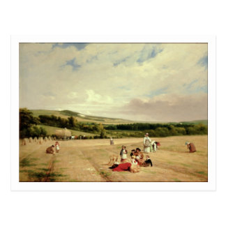 The Harvest Field (oil on canvas) Postcard