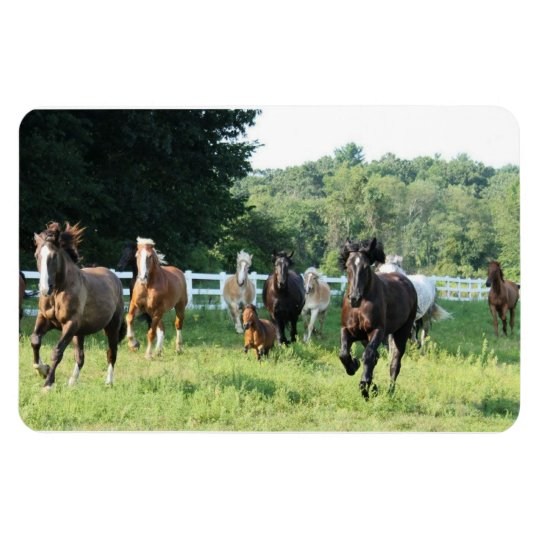 The herd and the Herdmaster Rectangular Photo Magnet