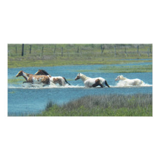 The Herd by Leslie Peppers Photo Card Template