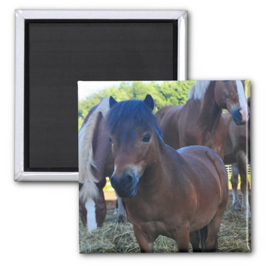 The Herdmaster Maganet Square Magnet