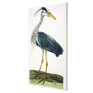 The Heron (Ardea cinerea) plate from 'The British Canvas Print