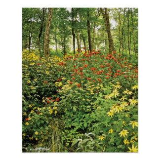 The Hills are Alive with Wildflowers Poster