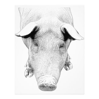 The Hog in Black and White 21.5 Cm X 28 Cm Flyer