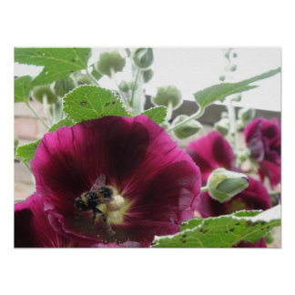 The Hollyhock and the Bee Print