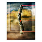 The human spine postcard