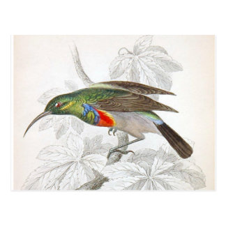 The Hummingbird Postcard