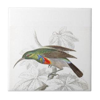 The Hummingbird Small Square Tile