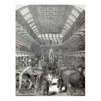The Hunterian Museum Postcard