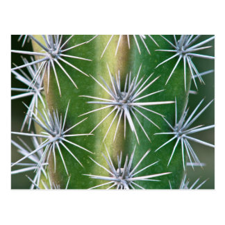 The Huntington Botanical Garden, Octopus Cactus Postcard