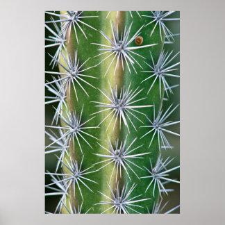 The Huntington Botanical Garden, Octopus Cactus Poster