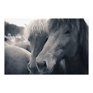 The Icelandic Horse Photo Print