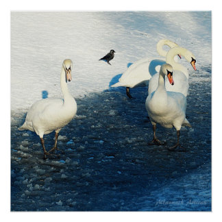 The Impossible Search - Swans on Winter Lake Poster