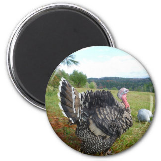 The Incredible Turkeys 6 Cm Round Magnet