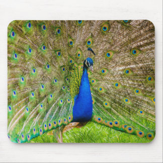 The Indian peafowl Mouse Pad