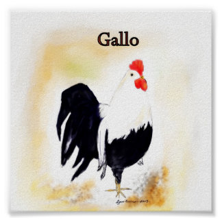 The Italian Rooster Gallo Poster