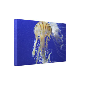 The Jellyfish Canvas Print