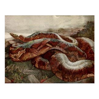 The Jungle Book: Kaa, the Python Postcard