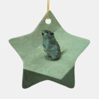 The Killer Mouse (Onychomys leucogaster) howls! Ceramic Star Decoration