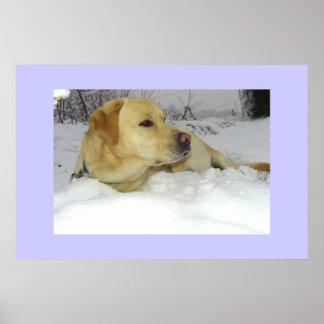 The King in the snow - Labrador winter scene Poster