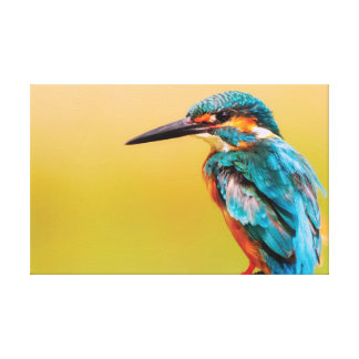 The Kingfisher. Canvas Print