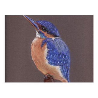 The Kingfisher Postcard