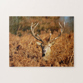 The King's Deer, red deer stags 1 Jigsaw Puzzle