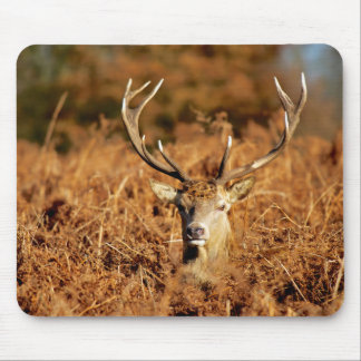 The King's Deer, red deer stags 1 Mouse Pad