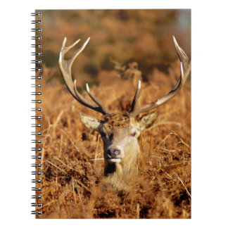 The King's Deer, red deer stags 1 Notebook