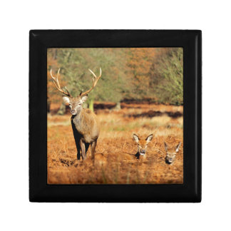 The King's Deer, red deer stags 2 Gift Box