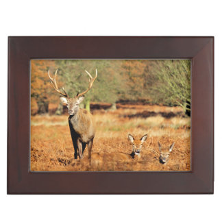 The King's Deer, red deer stags 2 Keepsake Box