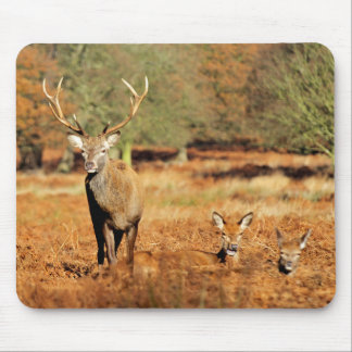 The King's Deer, red deer stags 2 Mouse Mat