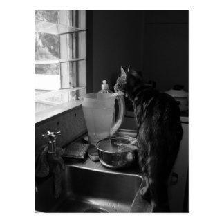 The Kitchen Sink Postcards