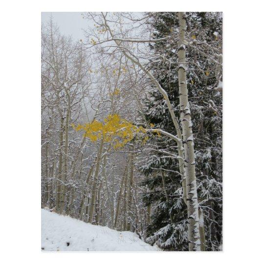 The Last Aspen Postcard