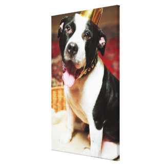 The latin name for all domestic dogs is Canis Canvas Print